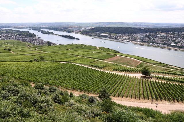 Stadtleben GmbH unterstützt Rheingauer Weinwerbung